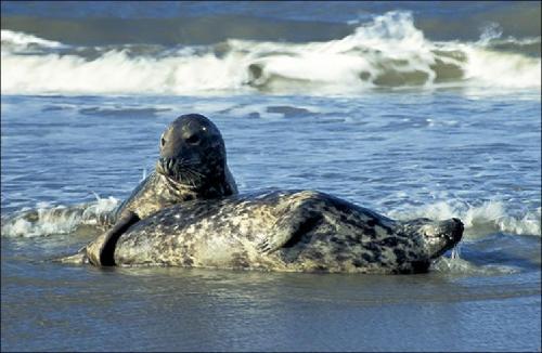 East Coast Seals